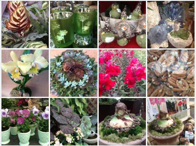 Pecans, decorative containers, concrete planters, orchids