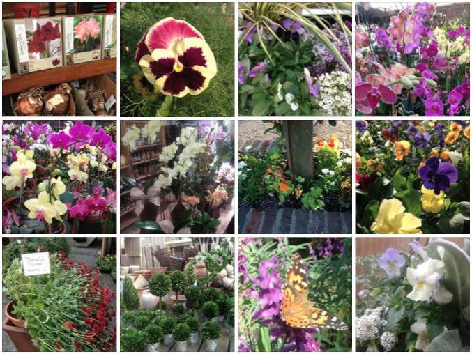 Pansies, snapdragons, flower seeds, topiaries