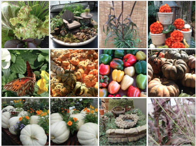 Pumpkins, butterflies, lettuces, herbs, peppers, grasses