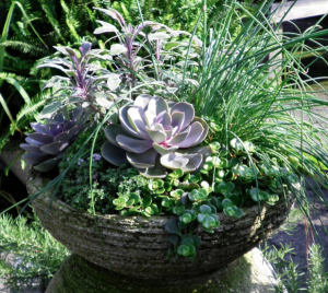 Herbs and Succulents...