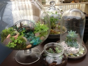 Terrariums in all shapes and sizes...
