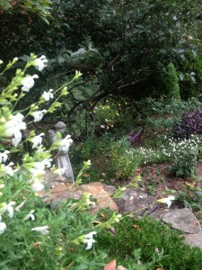 Perennial salvia leans over a carpet of thrift (Creeping phlox) in this border...