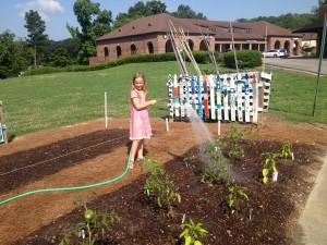 Leah watering new vegetable plantings...