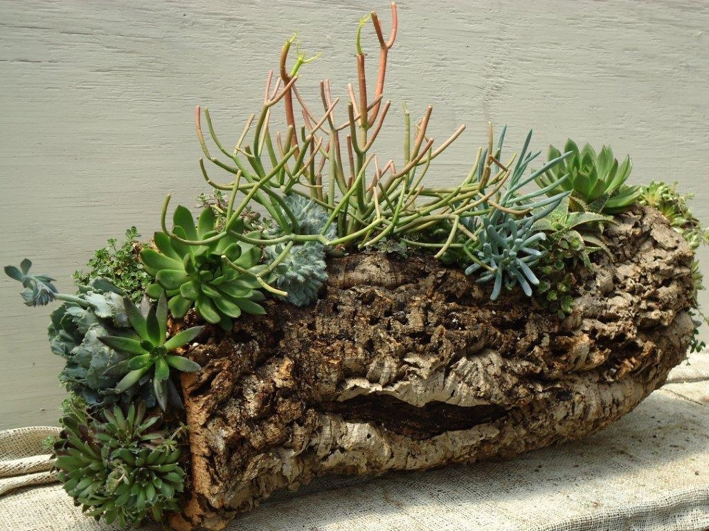 Cork Bark Planter With Pencil Cactus And Succulents Oak