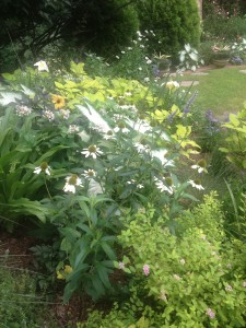 midsummer...perennials and annual share this bed.