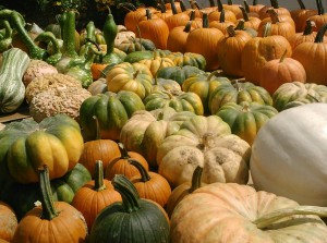 So many different pumpkins!