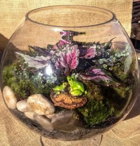 Terrarium & Frogs