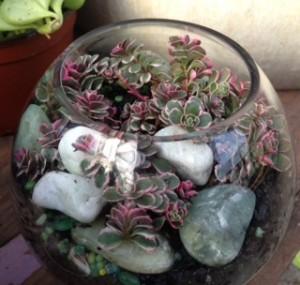 Decorative stones and a tricolor sedum...