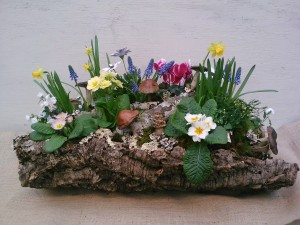 Cork Bark Planter with Spring Bulbs and Lichen Branches