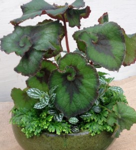 I loved this begonia in this pot...