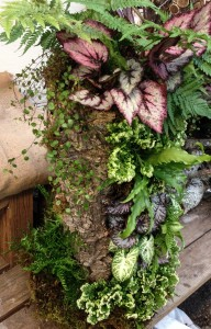 Cork Bark Planter - Autumn Fern, Rex Begonia, Angelvine, Nephthitis, Selaginella 'Frosty', Tooth Brake Fern, Bird's Nest Fern