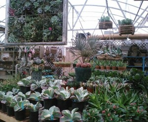 succulents in the greenhouse...