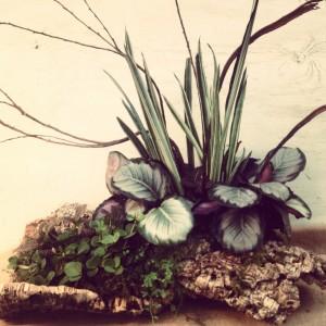 Two corkwood pieces I fashioned into a planter - Bantel's Sensation sanseveria, calathea, trailing pepperomia and selaginella...