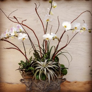The silvery air plant leaves work well with this container.  Calathea leaves add even more interest...