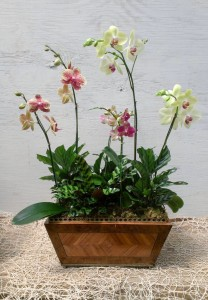 Phael Orchid Arrangement