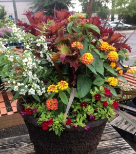Container Planting for Sun