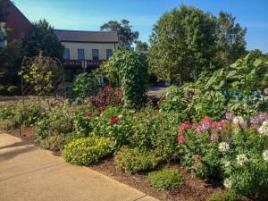 The bees, butterflies and hummingbirds appreciate the flower garden...