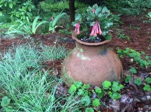 Olive Jar in the Garden...