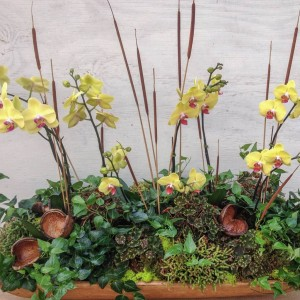 Fall Orchid Arrangement - Customer's Dough Bowl