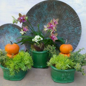 A vignette Jamie created with an orchid, sedum, tiny pumpkins and more...