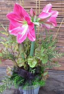 Amaryllis arrangement...