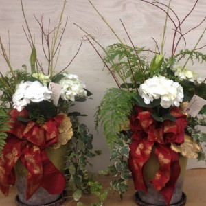 Hydrangeas & Amaryllis...Gifts
