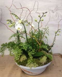 Phalaenopsis Orchid Arrangement with Curly Willow