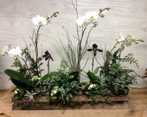 Orchids and air plants...
