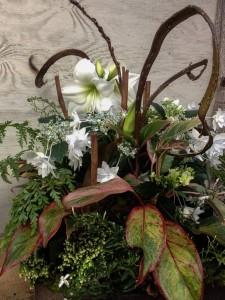 Holiday Arrangement - Amaryllis, Shooting Star Hydrangea, Fantail Willow