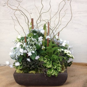 Holiday Arrangement -  Shooting Star Hydrangea,Amaryllis, Curly Willow