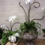 Orchids, Ferns, Ivy, Hydrangeas in Pretty Pots