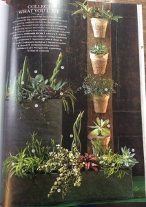 Succulents! Look at all the different leaf shapes and sizes here...Lauren's vertical planter is wood from a pallet with pots wired on. Photo Courtesy Southern Living