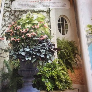 One of my favorite shade planting designs because of how wonderfully it grew out after this picture was taken. The 'Babywing' pink begonia was a showstopper, growing through the large 'Garden White' caladiums and the carex 'Evergold' mingled with the silver waffle plant, (hemigraphis) trailing over the edge beautifully... Photo Courtesy Southern Living