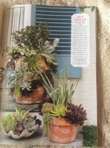 Three succulent plantings by Molly certainly showcase all the variety available... Photo Courtesy Southern Living