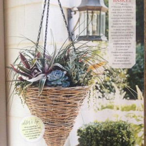 I wanted to do something a little different in this cone shaped basket, so I started with a pot of chives and added rhoes (oyster plant) Echeverias and trailing string of pearls for a textural feast... Photo Courtesy Southern Living