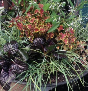 Contrasting leaves of coleus, grassy Carex and ajuga make a vibrant combination...