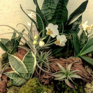 driftwood pieces with orchids and houseplants