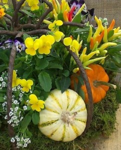 Fall - Violas, Peppers and Minipumpkins