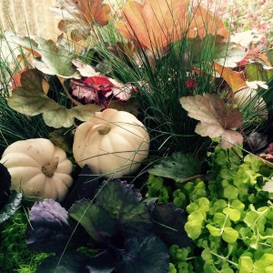 Fall - Arrangement