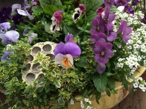 Planted...violas, herbs and pods...design Molly Hand