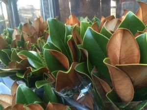 Bunches of Magnolia...