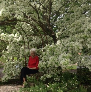 Chinese fringe tree in Weesie Smith's garden