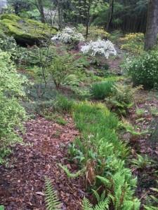 Rock Outcrop Kris' Garden Late March 2016