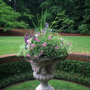 Urn Planted for Summer