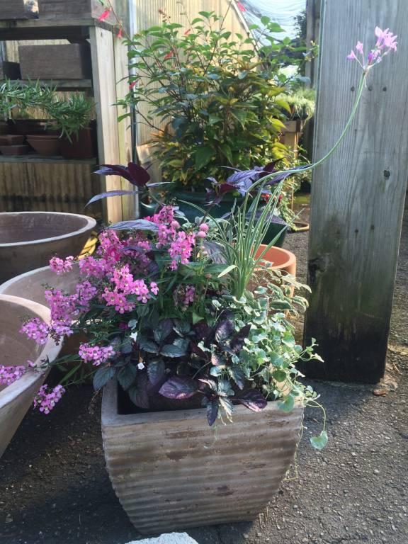 Container Gardening Design Tips Oak Street Garden Shop