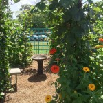 'Better Late Than Never' Pollinator Garden - Looking Through The Arbor