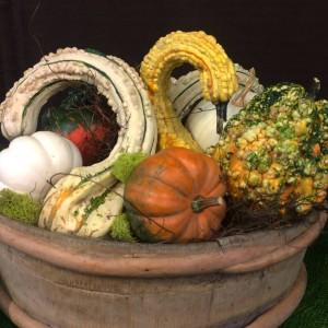 Pumpkin/Gourd Arrangement