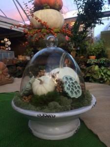 Cloche with Mini White Pumpkin
