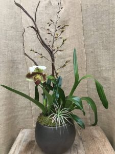 Oncidium and Paph Orchids...