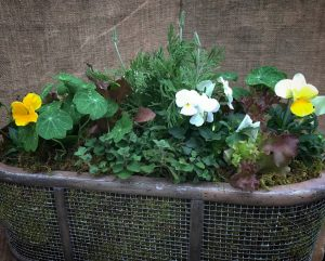 Container Garden with Herbs and Violas